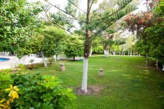 gallery la cite hotel trees