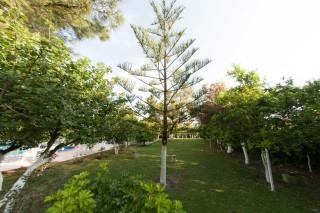 gallery la cite hotel trees garden